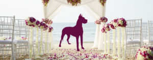 tips for clients wanting to incorporate pets at wedding